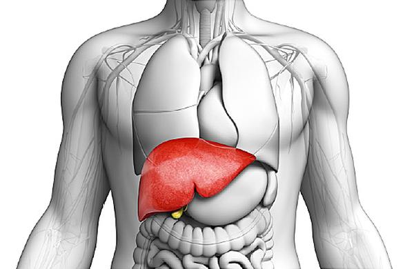 Kako delujejo jetra?